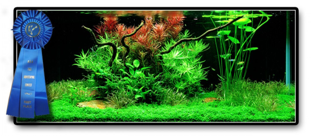 Whatu0027s Is The Secret? Do You Tend To Change Your Aquarium After Seeing A  Gorgeous Aquarium? But You Do Not Know How? Read On And Learn The Basics So  You Can ...